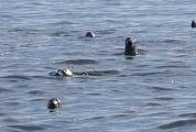 Seal safaris with start from Käringsund
