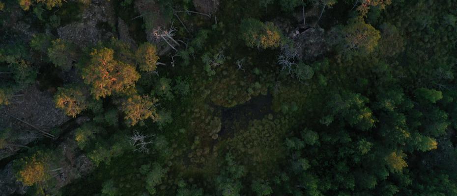 Flygbild över skogen vid aktivitetsskogen hos Käringsund Resort & Conference.
